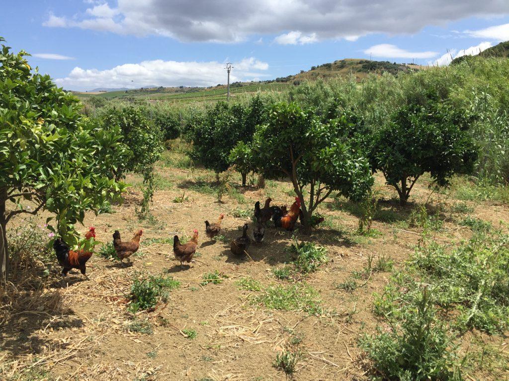 Particolare Azienda Agricola Biologica - All rights reserved - © Bioviola