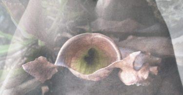 Human Nature, la prima personale di Federica Rugnone