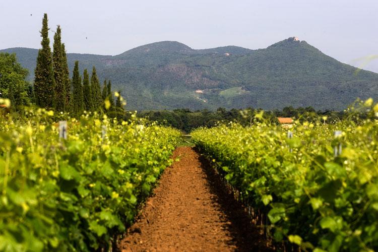 Aldone 2015 - Terre del Marchesato