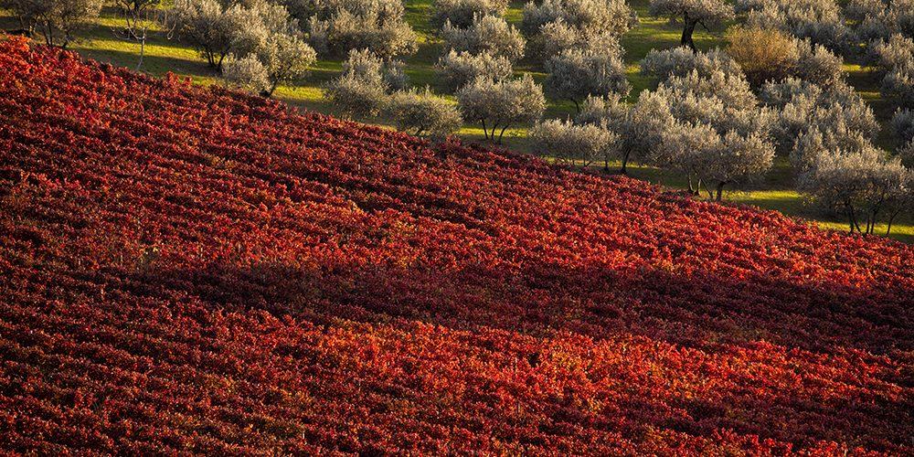 Consorzio Tutela Vini Montefalco: eccellente la vendemmia 2020
