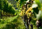 Puntay Chardonnay 2018 - Erste+Neue