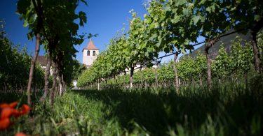 Pinot Bianco 2019 - Muri Gries