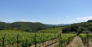 Rosso di Montalcino 2018 - Casisano