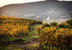 Rosso di Montalcino 2019 - Tenuta Fanti